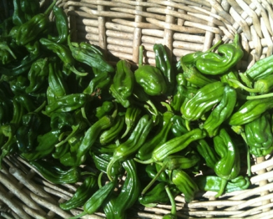 Shishitos Peppers